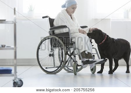 Dog Assisting Disabled Senior Woman