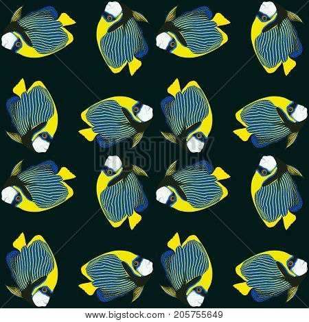 Vector seamless pattern from swim fish. Emperor angelfish. Pomacanthus imperator.