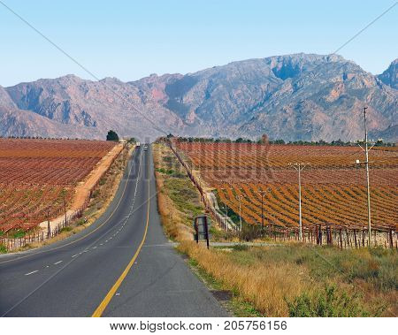 BEAUTIFUL GOLDEN RED VINEYARDS IN AUTUMN, ON EITHER SIDE OF THE ROADWAY, IN THE GRAPE GROWING AREA OF CAPE TOWN, SOUTH AFRICA