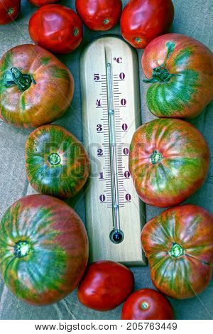 A wooden thermometer and ripe red tomatoes