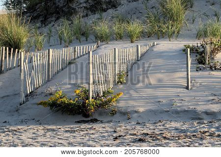 Four rows of snow fencing put in place to stem beach erosion.