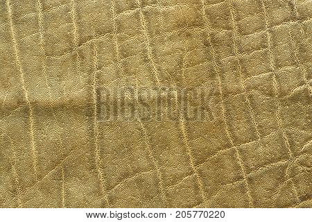 detailed african elephant pelt animal texture ( Loxodonta africana )