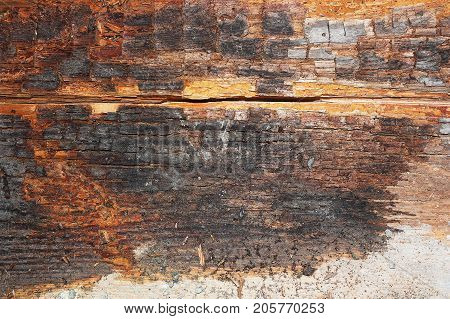 dry rot on old wood beam after water infiltration in building ( Serpula lacrimans )