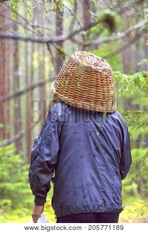 An unfortunate mushroomer walks through the forest in the rain, an empty basket on his head