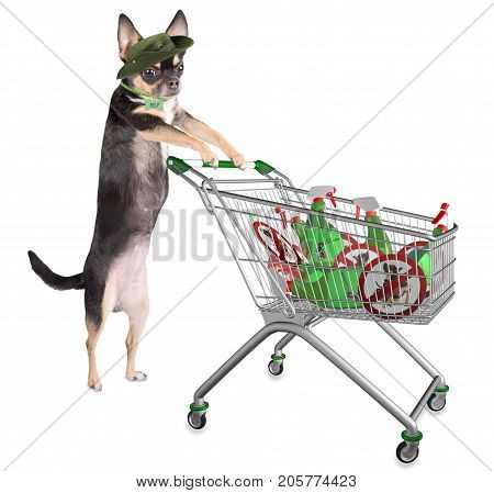 Cute dog chihuahua have a cart with sprays and itch sign boards