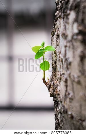 Fresh Baby Branch Sprouting from an Old Tree