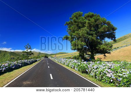 Mountain road on Flores Island, Azores, Portugal, Europe
