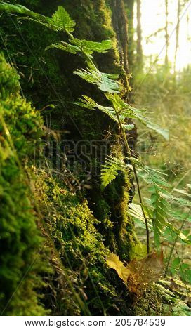 The fern leaf leaned against the tree trunk in the rays of the forest sun.