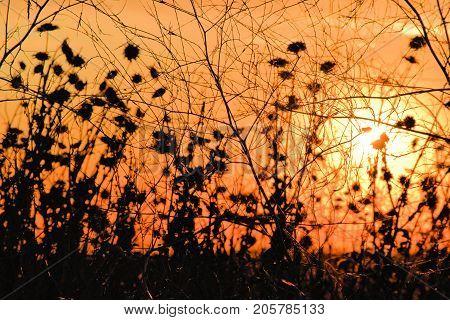 Sun setting beyond a rural field creating an orange sky