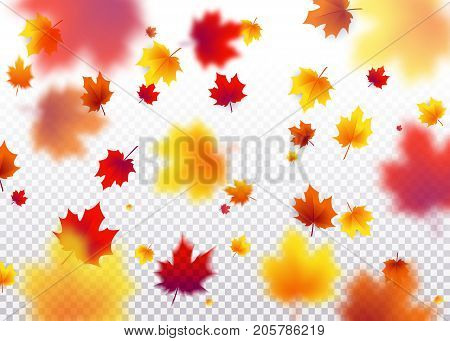 Vector illustration autumn flying red, orange, brown, yellow maple leaves isolated on transparent background. 3d fall pattern
