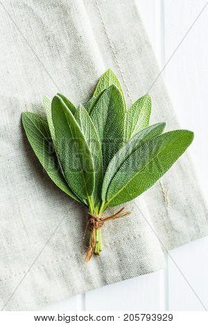 Salvia officinalis. Sage branch . Sage herb.