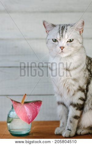 Nice aroma concept - cat sitting behind the nice scent flower