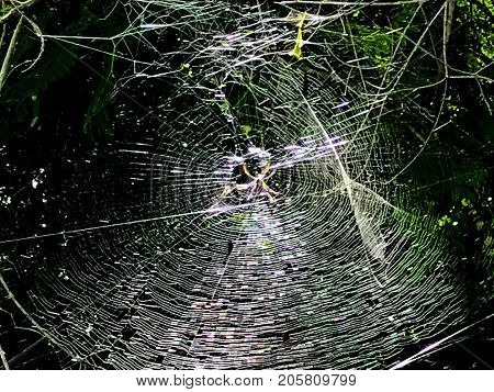 giant halloween spider web trap between trees