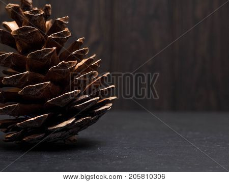 Pine Cone Backlight On A Dark Background, Copy Space