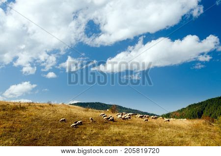 Idyllic rural scene of sheep herd grazing on grass and white puffy clouds above them