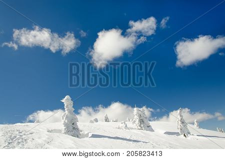 Winter landscape of mountain top or hill with several fir trees covered with frozen snow and puffy clouds above them against blue sky