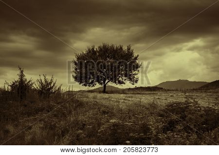 Lonely Tree Against A Blue Sky At Sunset. Summer Landscape With A Lone Tree At Sunset Barley Field I