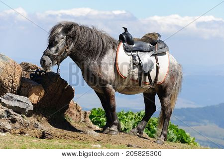 Saddled pony in the mountain ready for riding