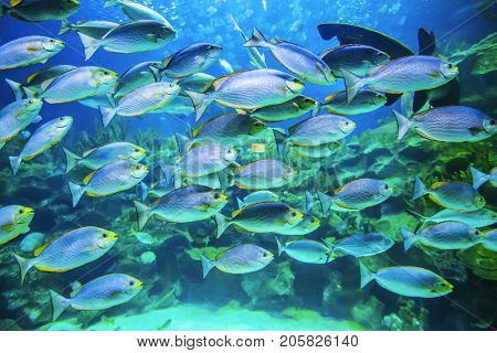 School of tropical fish underwater view background