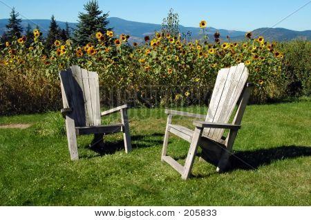 Adirondack Stühle In der Sonne