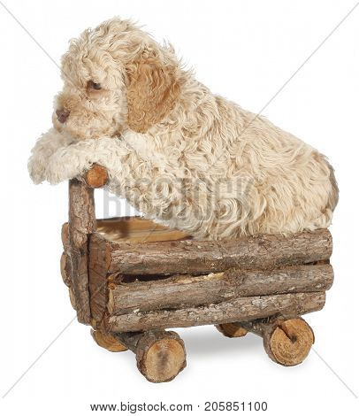 Cute dog puppy driving wooden car