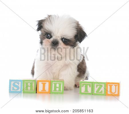 cute puppy behind block letters spelling word shih tzu