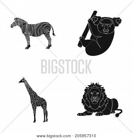 African zebra, animal koala, giraffe, wild predator, lion. Wild animals set collection icons in black style vector symbol stock illustration .