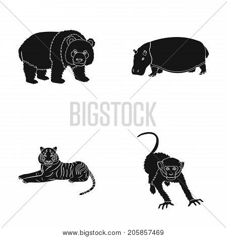 Bamboo bear, hippopotamus, wild animal tiger, monkey . Wild animal set collection icons in black style vector symbol stock illustration .