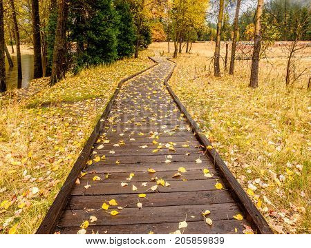 Fallen yellow autumn leaves on the boardwalk. Meadow in Yosemite National Park Valley at cloudy autumn morning. Low clouds lay in the valley. California, USA.