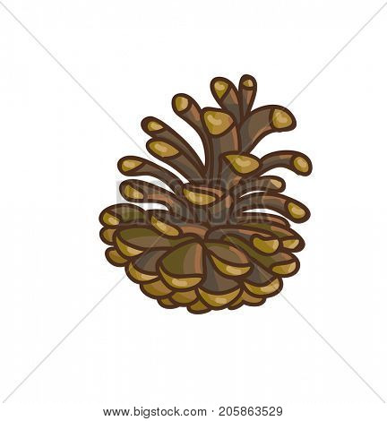 Pinecone cartoon drawing.  Illustration.