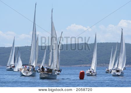 Sailing In A Championship