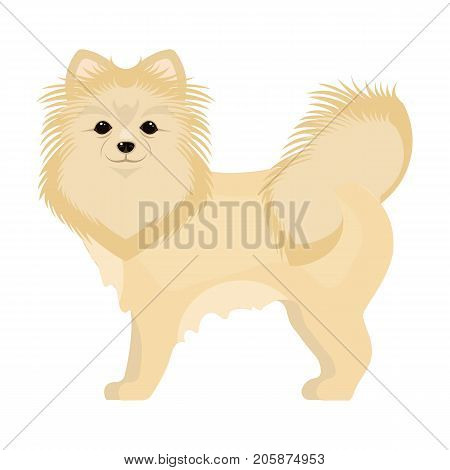 Spitz single icon in cartoon style.Spitz vector symbol stock illustration .