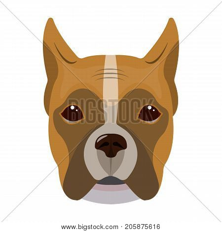 A dog, a breed of boxer.Muzzle of a boxer single icon in cartoon style vector symbol stock illustration .