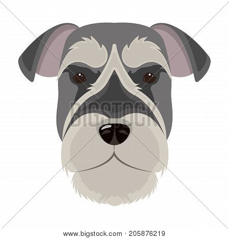 A breed of a dog, a risen schnauzer.Risen Schnauzer Muzzle single icon in cartoon style vector symbol stock illustration .