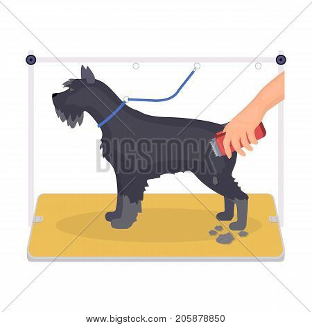 Haircut dogs in a stylish salon. Pet , dog care single icon in cartoon style vector symbol stock illustration .