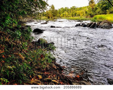 A shoreline full of greenery at the Haw River in North Carolina.