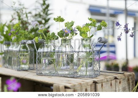 Herbs In Water-filled Glass Bottles In Wire Trays