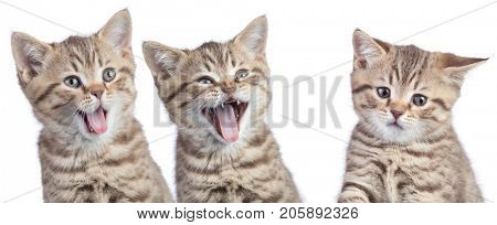 funny cats with opposite emotions. Two happy and one unhappy or sad kittens isolated on white.