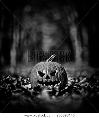 Halloween pumpkin on leaves in woods in black and white