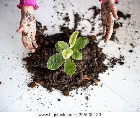 Environmental conservation child's hand planting for nature