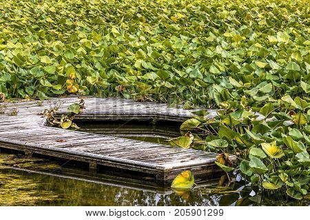 An old rundown dock surrounded by lilypads on Hauser Lake in Idaho.