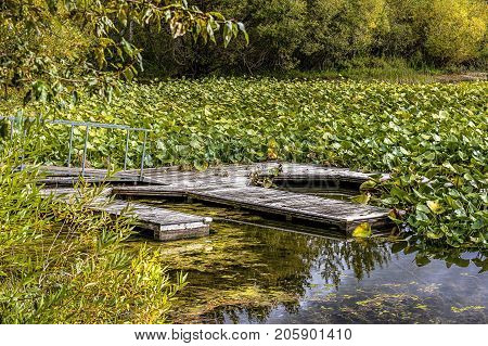 Old abandoned dock among lilypads on Hauser Lake in Idaho.