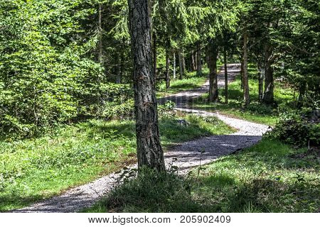 sciury pathway near molveno trentino alto adige italy