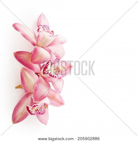 Three  pink Orchid flowers (Cymbidium)  isolated on white background.