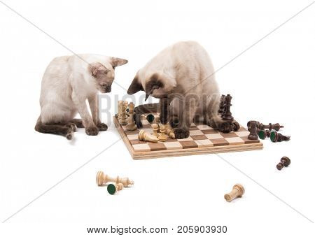 Two Siamese kittens ruining a chess game, on white