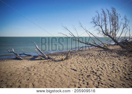 View of Point Pelee National Park beach in the fall at sunset time, lake Erie, southwestern Ontario, Canada