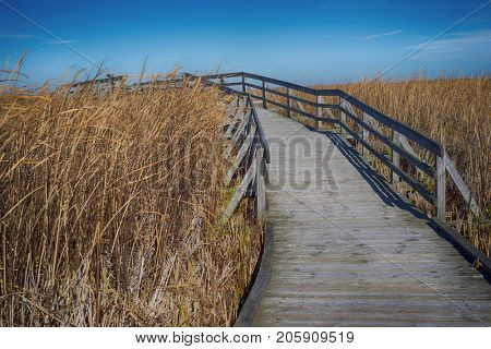 View of Point Pelee National Park boardwalk with yellow grass during the fall season. Taken in southwestern Ontario, Canada