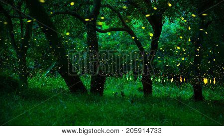 Firefly flying in the forest. Fireflies in the bush at night at Prachinburi province Thailand. Long exposure photo. The forest in fairy tale. Magic fairy forest