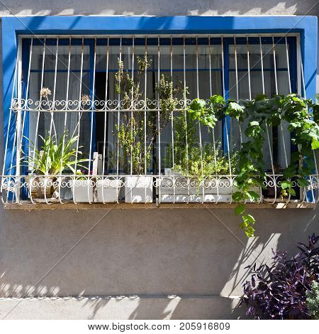 Window Decorated with Flower in Tel Aviv