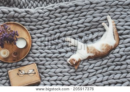 Ginger kitten relaxing on knitted woolen chunky blanket. Book and wooden tray with home decor on the warm soft bed. Scandinavian style, autumn weekend cozy concept.
